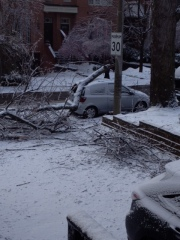 Car with tree limb resting on it